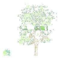 Blocco Cad di Cespuglio e albero in dwg