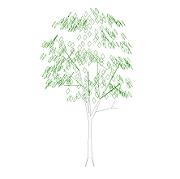 Blocco Cad di Tree – Albero in prospetto in dwg