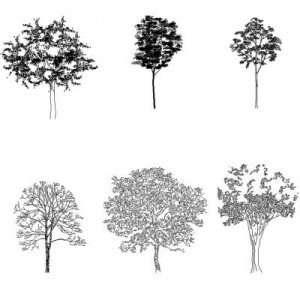 Blocco Cad di Sei alberi complessi in dwg