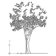 Tree-prosp
