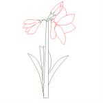 Fiore in prospetto