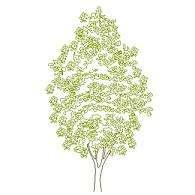 tree_elev12