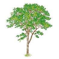 tree_elev13