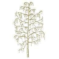 Blocco Cad di Albero dettagliato in prospetto (14) in dwg