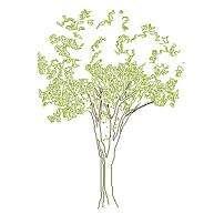 tree_elev7