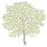 tree_elev8