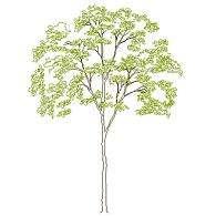tree_elev9